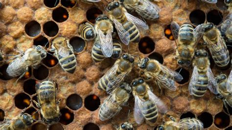 Survey: Almost half of all bee hives in the U