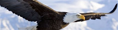 They will soar on wings like eagles - Faith At Work Iowa