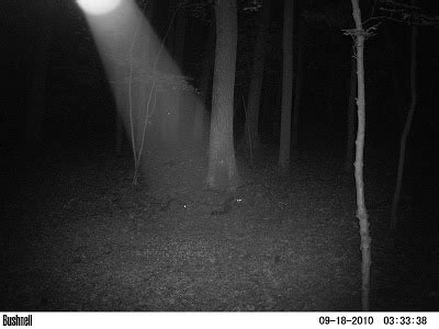 Phantoms and Monsters - Real Eyewitness Cryptid Encounter