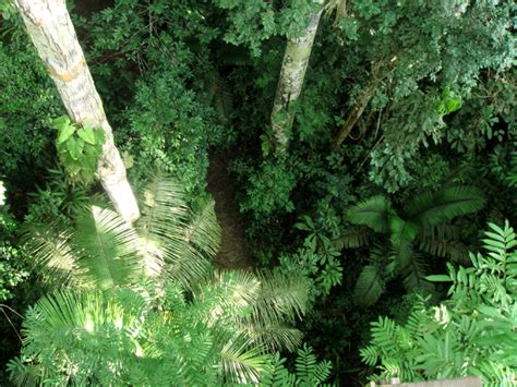 Looking Down on Primary Rainforest   Medicine Hunter